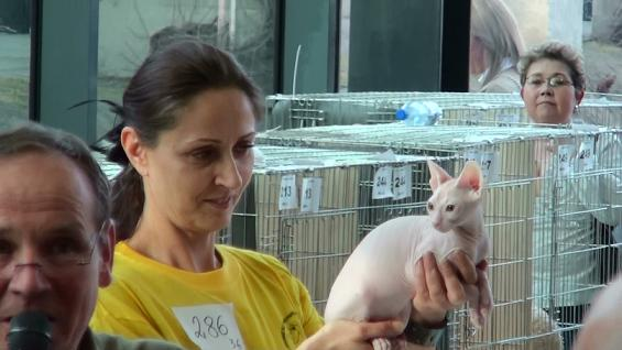 Internationale Cat Show in Wroclaw, Pl - BIS
